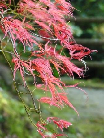 白滝公園 紅葉 6