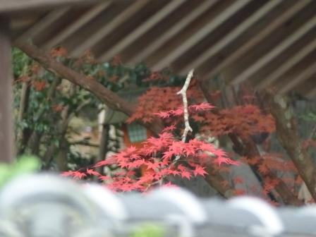 西山興隆寺 紅葉 7