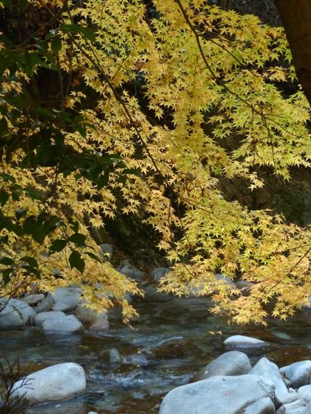 鈍川渓谷 紅葉 2