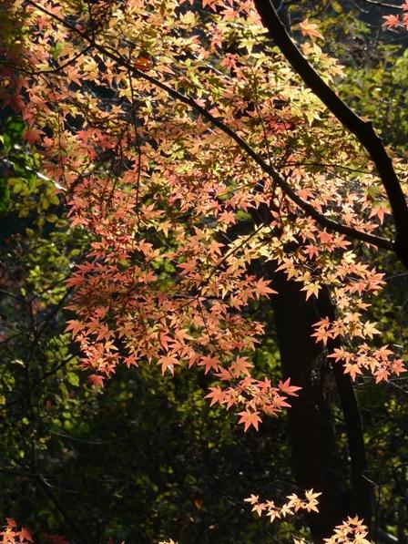鈍川渓谷 紅葉 3