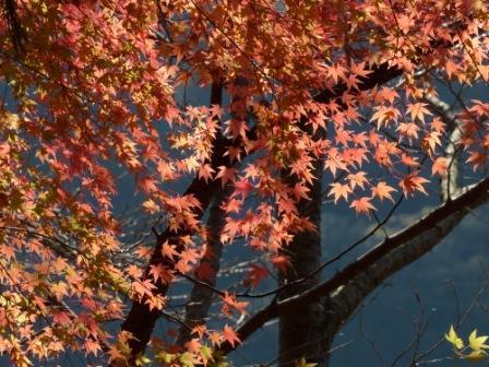 鈍川渓谷 紅葉 4