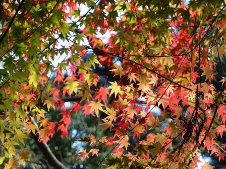 鈍川渓谷 紅葉 5