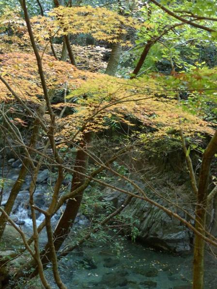 鈍川渓谷 紅葉 7