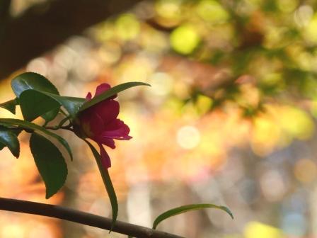 鈍川渓谷 紅葉 8