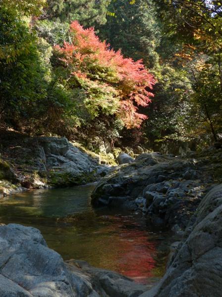 鈍川渓谷 紅葉 9