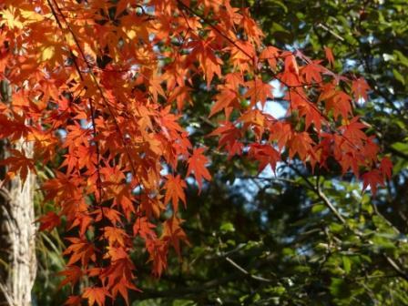 鈍川渓谷 紅葉 11