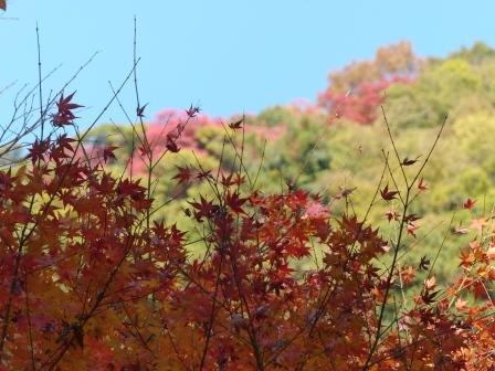 鈍川渓谷 紅葉 12