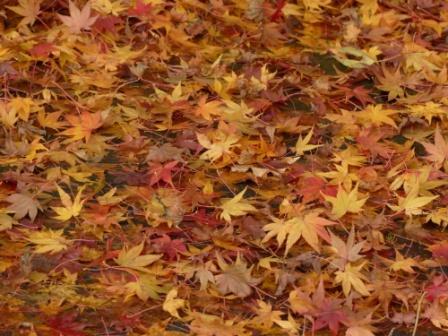稲荷山公園 紅葉 3