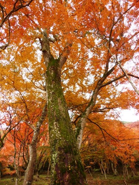 稲荷山公園 紅葉 14
