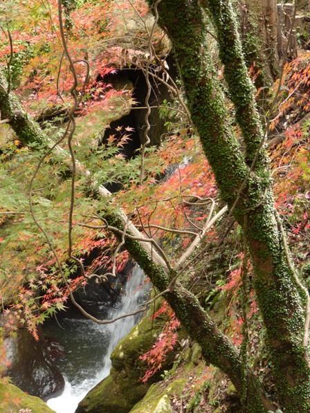 夫婦岩公園 紅葉 5