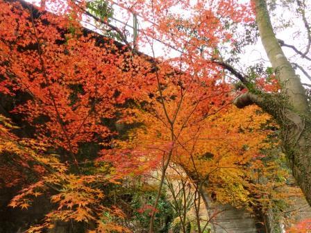 夫婦岩公園 紅葉 3