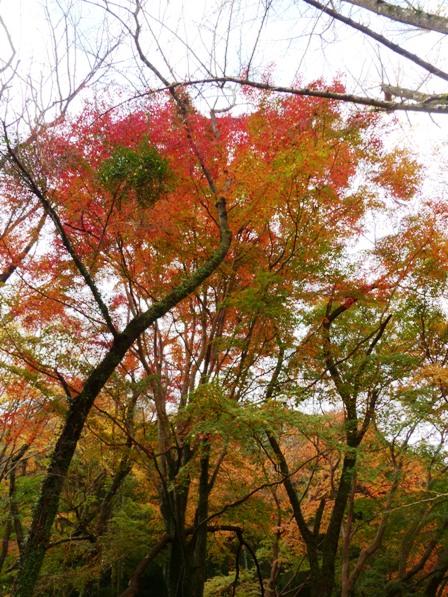 夫婦岩公園 紅葉 9