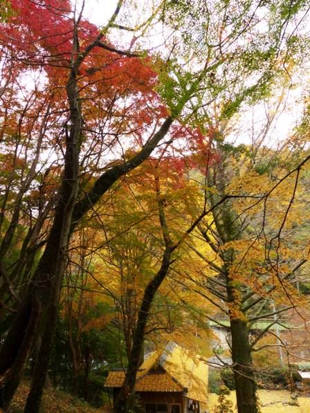 夫婦岩公園 紅葉 8