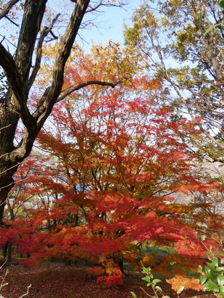 愛媛県総合運動公園 紅葉 8