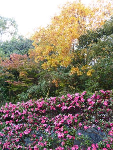 松山総合公園 紅葉 6