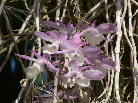 筑波実験植物園 ラン科の花 2-2