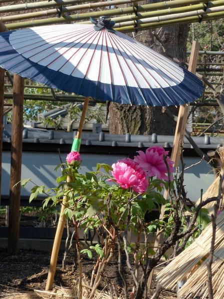 上野東照宮・ぼたん苑 4