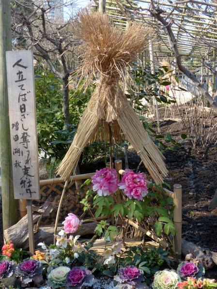 上野東照宮・ぼたん苑 3