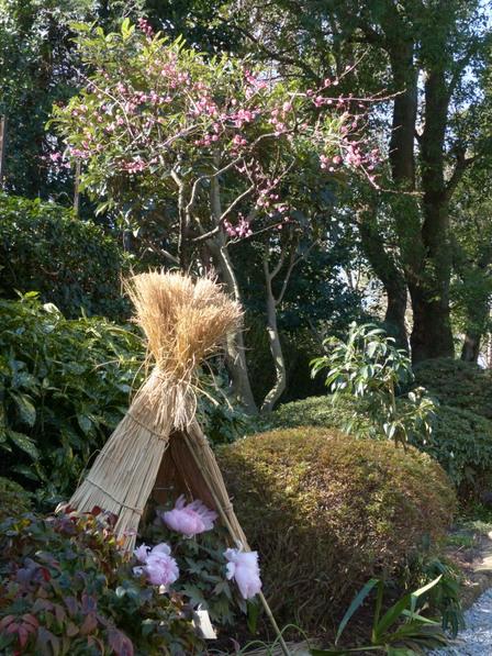 上野東照宮・ぼたん苑 10