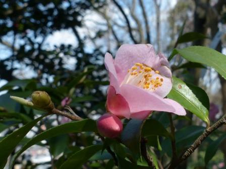 松山総合公園 港の春