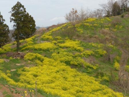 犬寄峠の黄色い丘 5