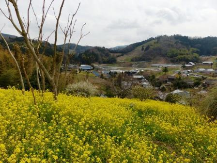 犬寄峠の黄色い丘 4