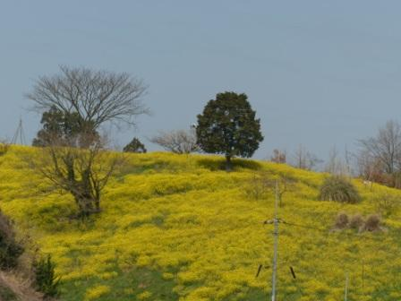 犬寄峠の黄色い丘 6