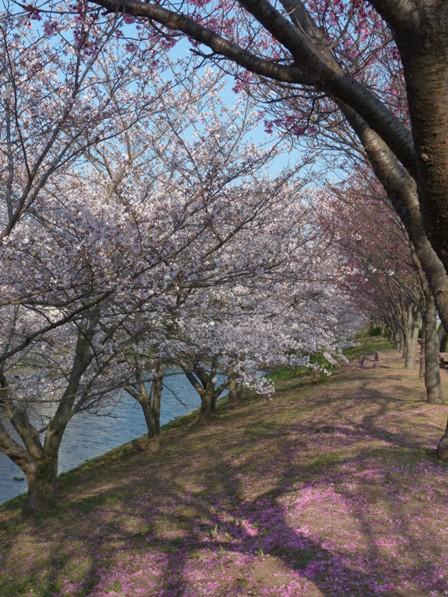 赤坂泉公園 2