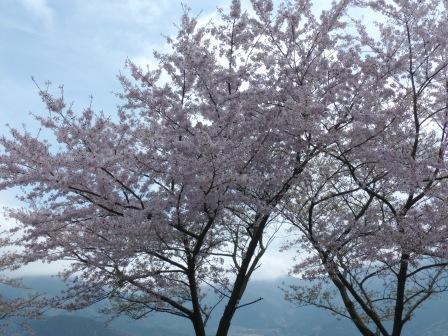 塩ヶ森ふるさと公園 桜