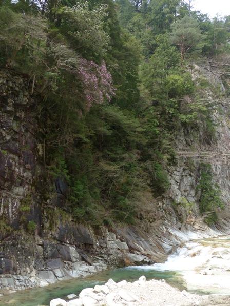 面河渓 風景 2