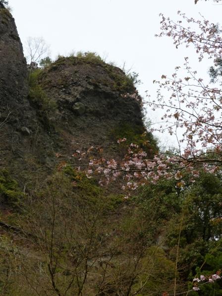 岩屋寺周辺 桜と礫岩峰