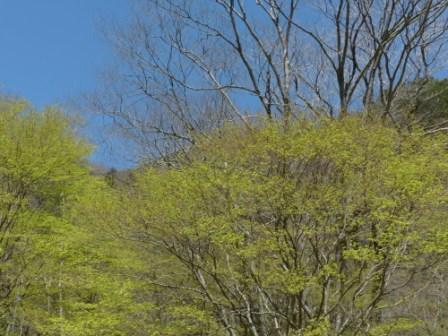 小田深山渓谷近辺 新緑