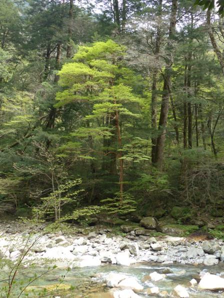 面河渓 10