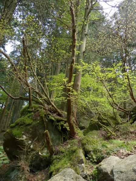 皿ヶ嶺 天狗の庭付近 2