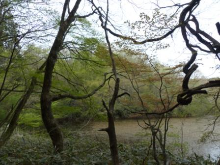 赤蔵ヶ池 3
