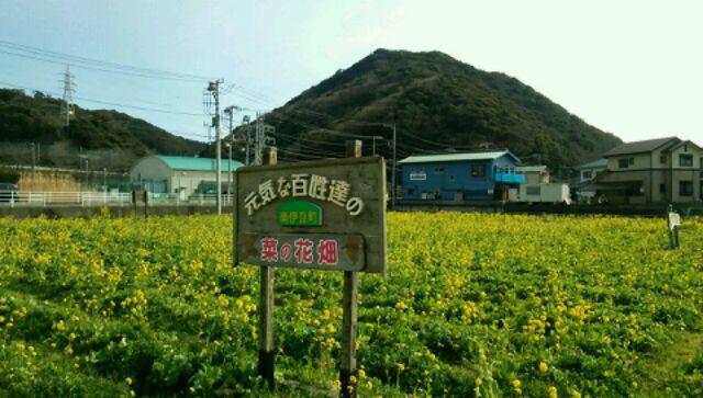菜の花畑 (3)