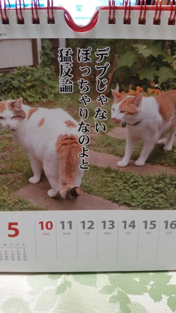 moblog_a0a71b10.jpg