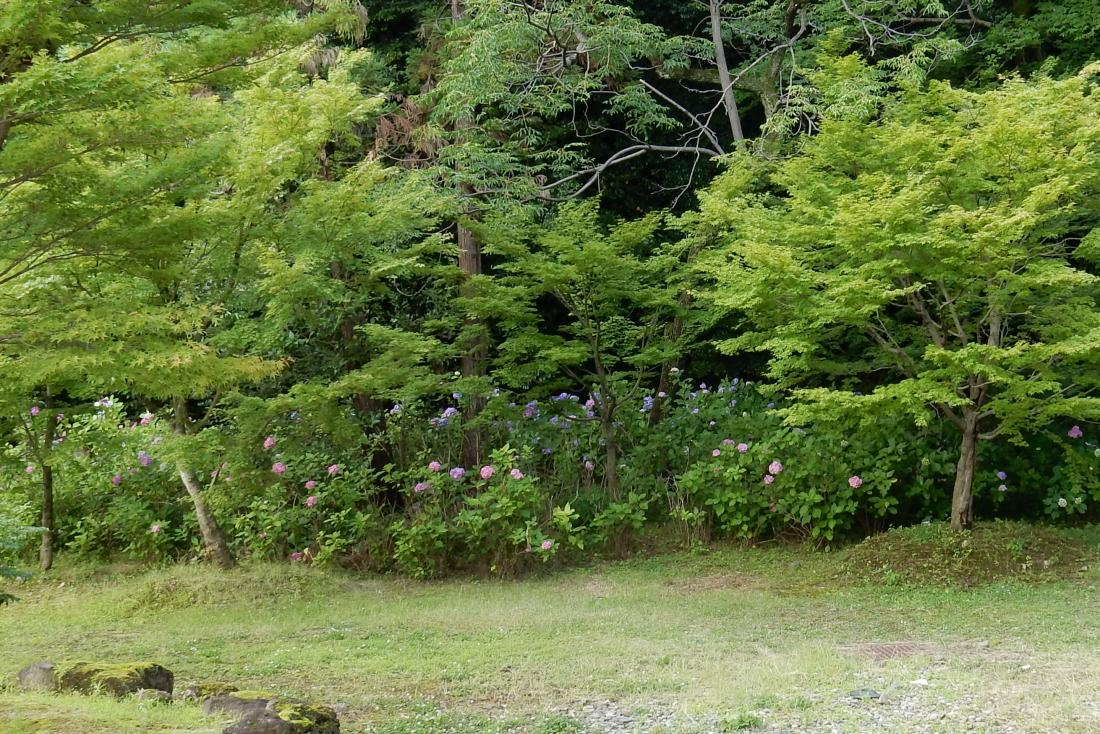 智積院今熊野 064