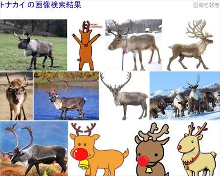 トナカイ画像検索結果_R