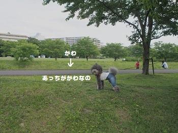 川さんぽ20150607-3