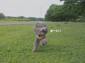 川さんぽ20150607-5