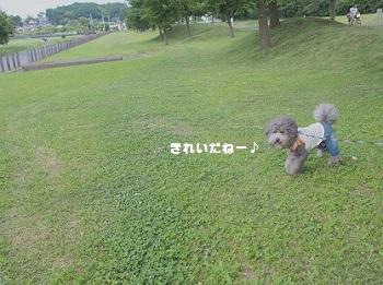 川さんぽ20150607-6