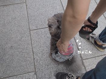 柴又20150613-8