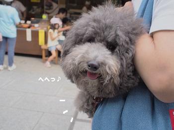 柴又20150613-9