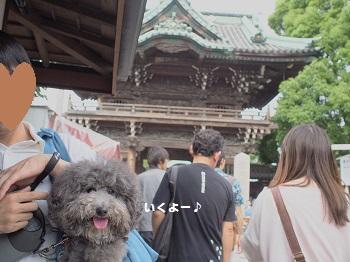 柴又20150613-11