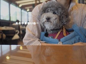 星乃珈琲20150621-2