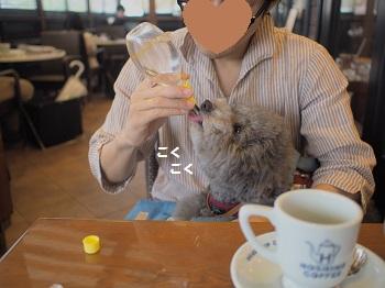 星乃珈琲20150621-7