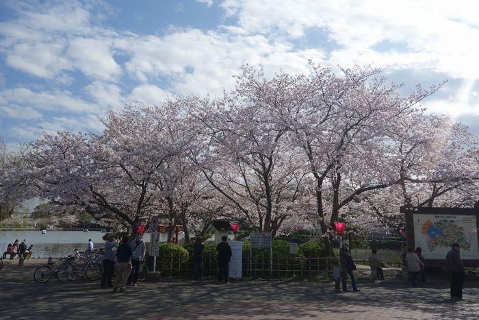 蓮花寺公園