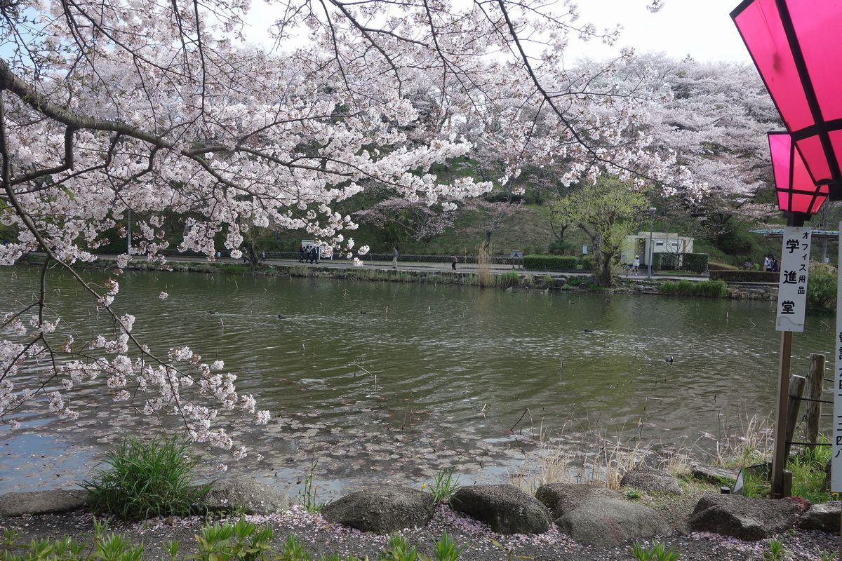 蓮花寺公園8