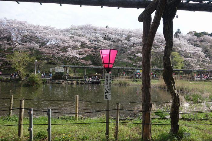 蓮花寺公園9